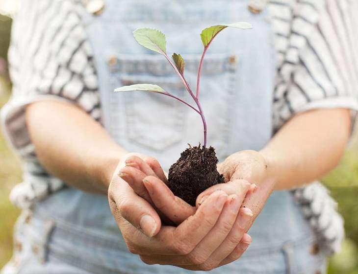 Да посадим дърво