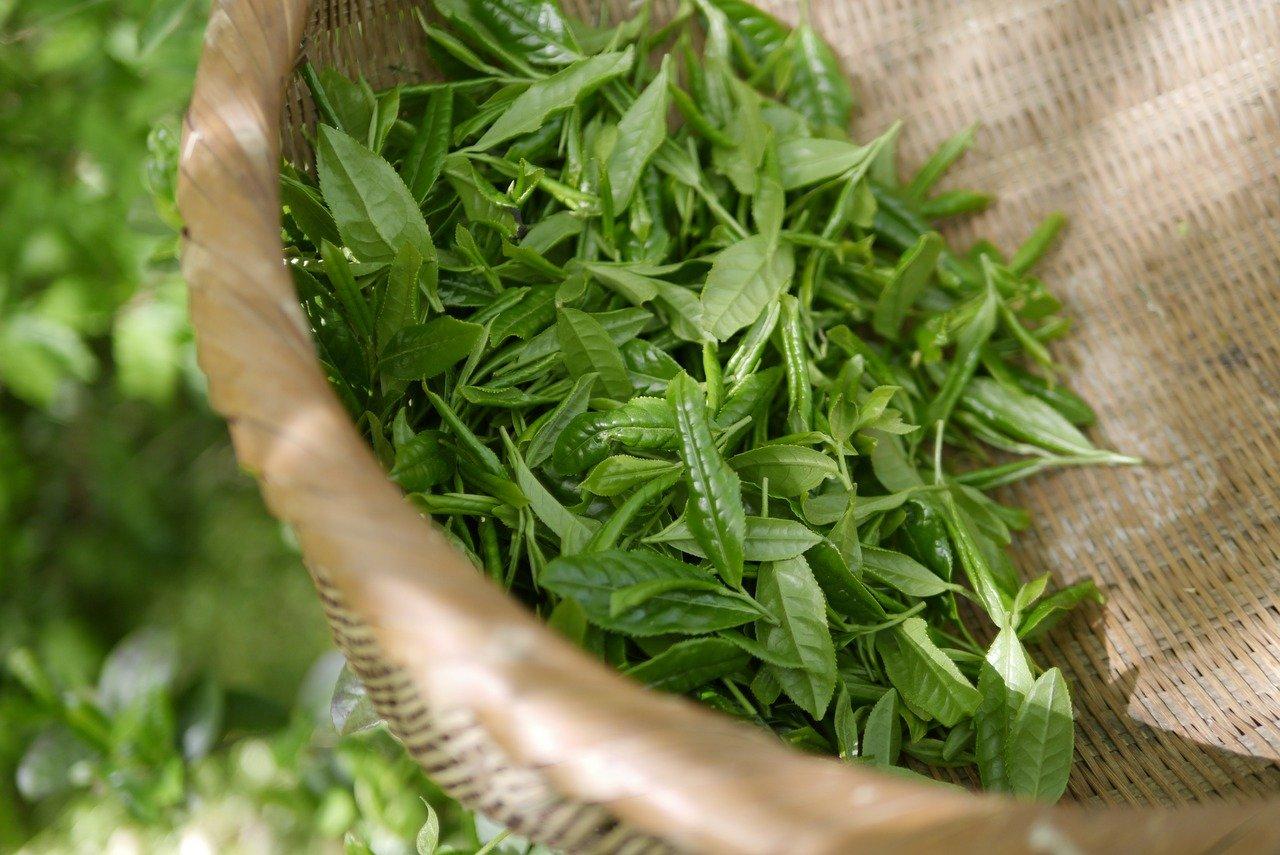 Помага ли зеления чай при диета за отслабване? Ползи и противопоказания.